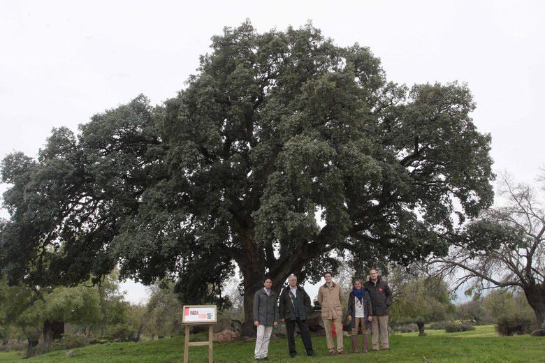 Se amplía el Catálogo de Árboles Singulares de la Comunidad de Madrid con otros 69 ejemplares de 10 especies