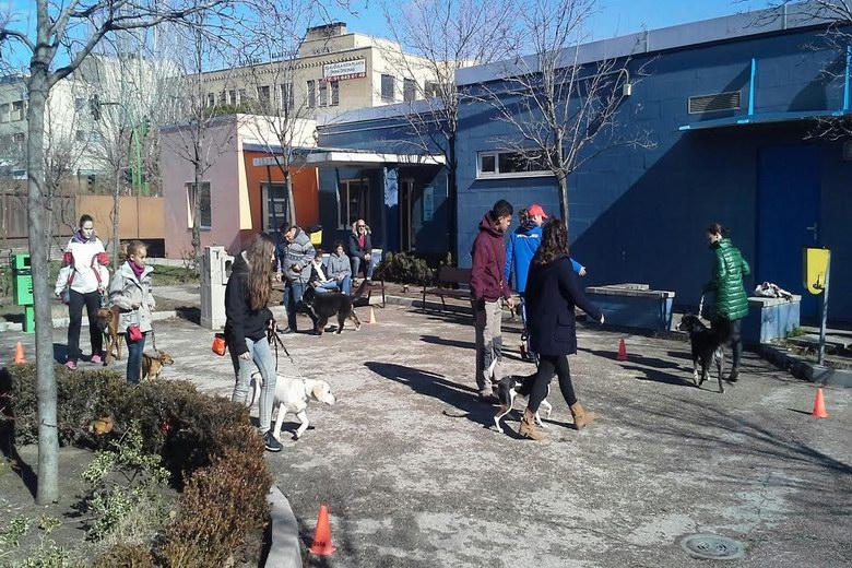 Alcorcón potenciará las actividades incluidas en el Programa de Educación Animal