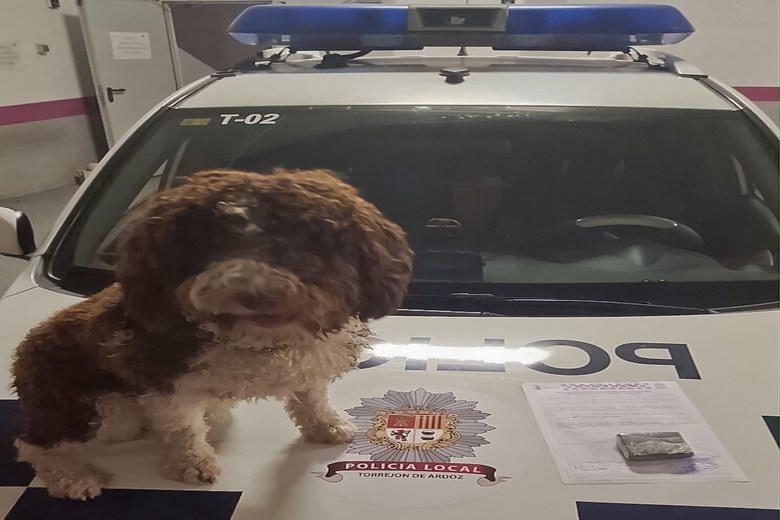 Detenido un individuo en Torrejón por tráfico de drogas gracias al Grupo Canino de la Policía Local