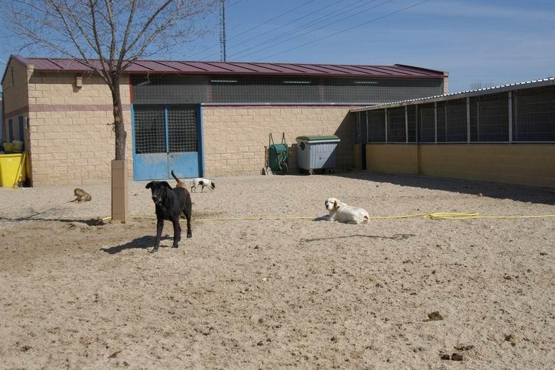 El Ayuntamiento de Valdemoro invertirá 26.000 € en el Centro de Protección Animal