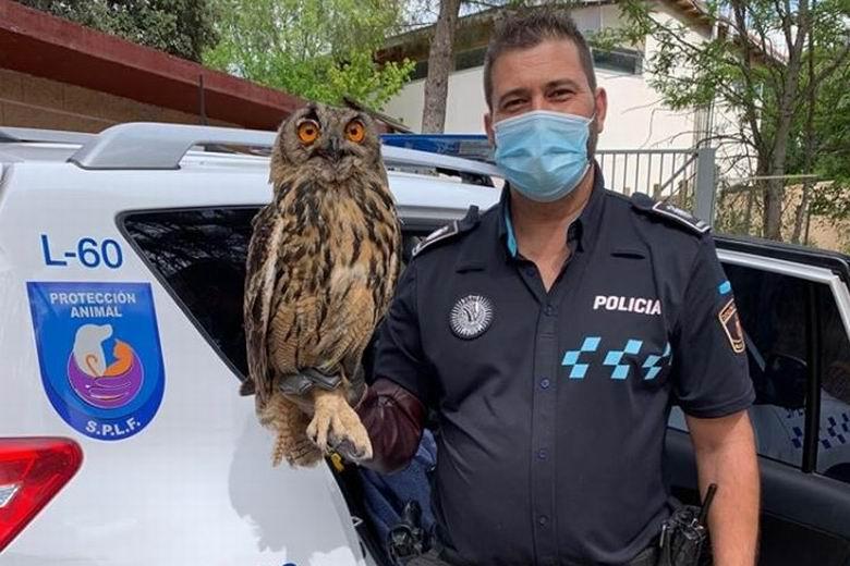 El grupo especializado en protección animal de la Policía Local de Fuenlabrada rescata a un búho real