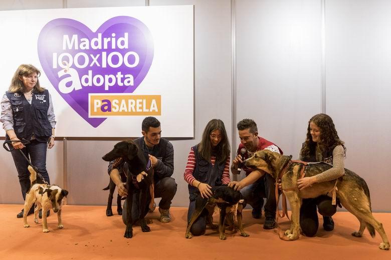 100×100 Mascota 2020 On Line, una salida para las mascotas abandonadas