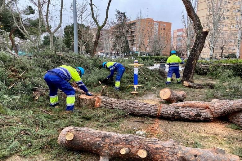 Móstoles revisa los árboles afectados por el temporal y pide precaución a los ciudadanos ante la alerta por viento