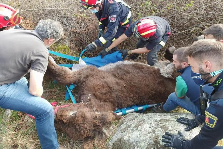 Los Bomberos de la Comunidad de Madrid rescatan a una burra atrapada entre alambres y zarzas en El Boalo