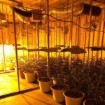 humanes tres detenidos poligono Plantación marihuana